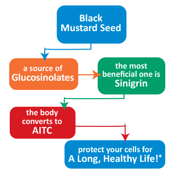 Black Mustard Seed Flow Chart